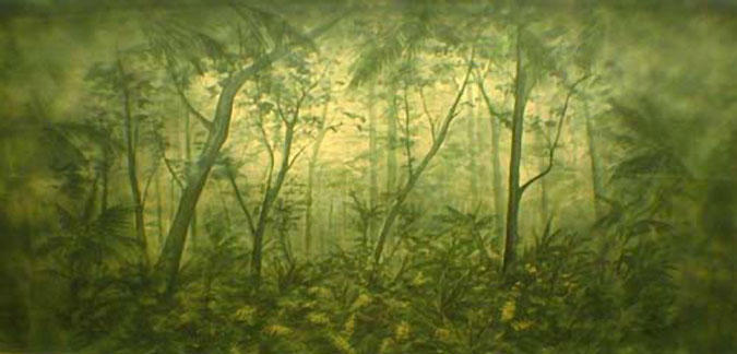 113 Tropical Forest